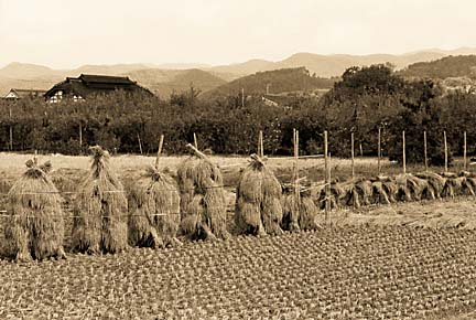 梁川の田圃